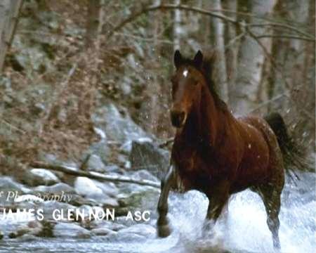 opening-horse.jpg